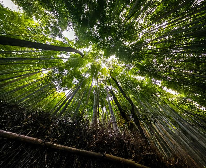 Los PaseosFollow Green Planet Sagano Bamboo Forest, Kyoto